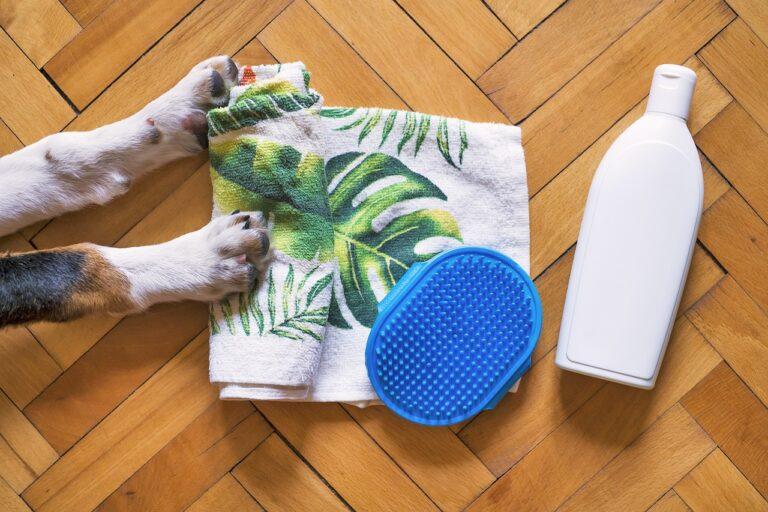 dog, dog shampoo, dog wash-5175532.jpg