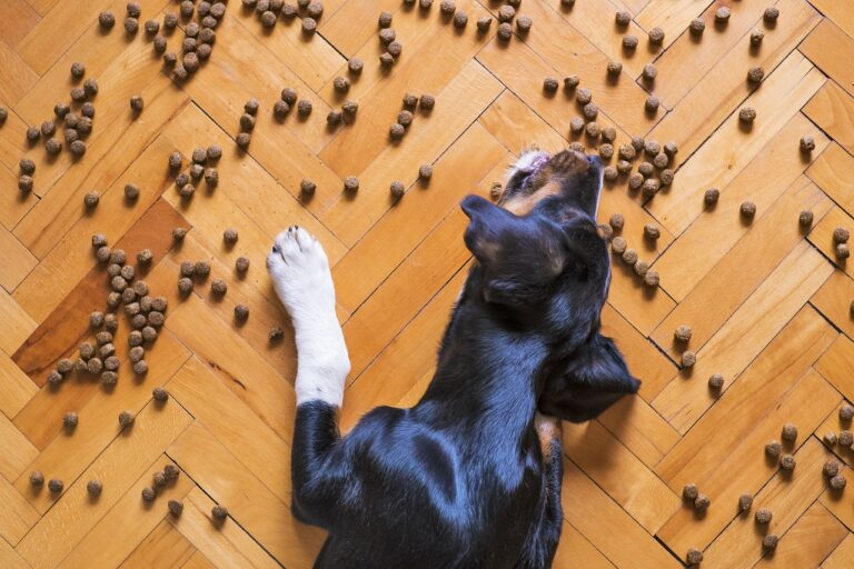 dog food, dog kibble, dry dog food-5175619.jpg